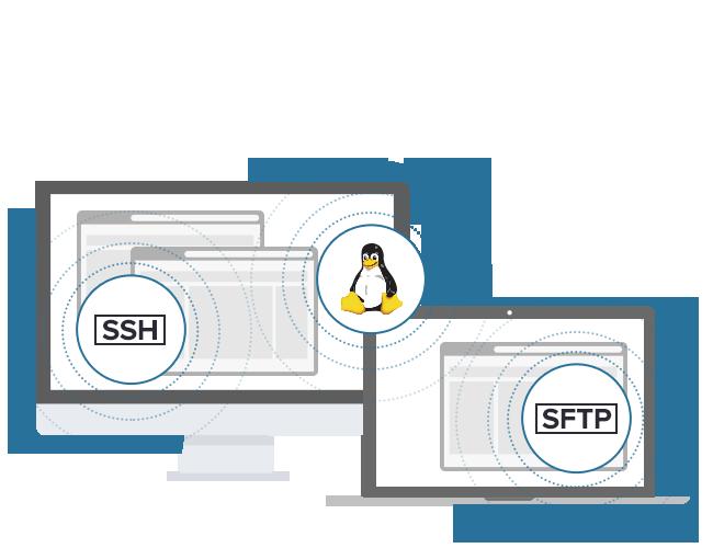 Website Hosting & Maintenance